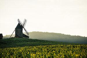 Le Moulin-à-Vent, emblème de son appellation